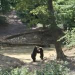 ursi zarnesti 150x150 - 5 idei de călătorie pentru 1 mai