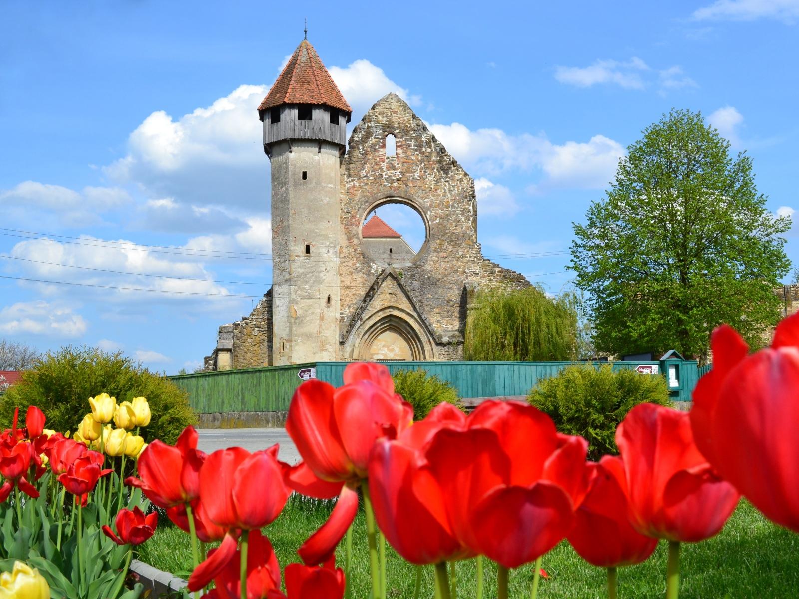 Mănăstirea Cârța - Mănăstirea Cârța - singura ruină cisterciană din România