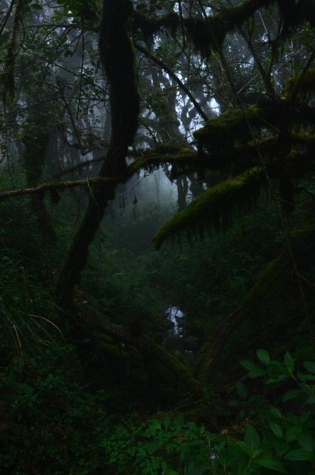 """Kilimanjaro 13 - Interviu cu Andrei Rădulescu - """"Un strop de fericire"""" pe Kilimanjaro"""