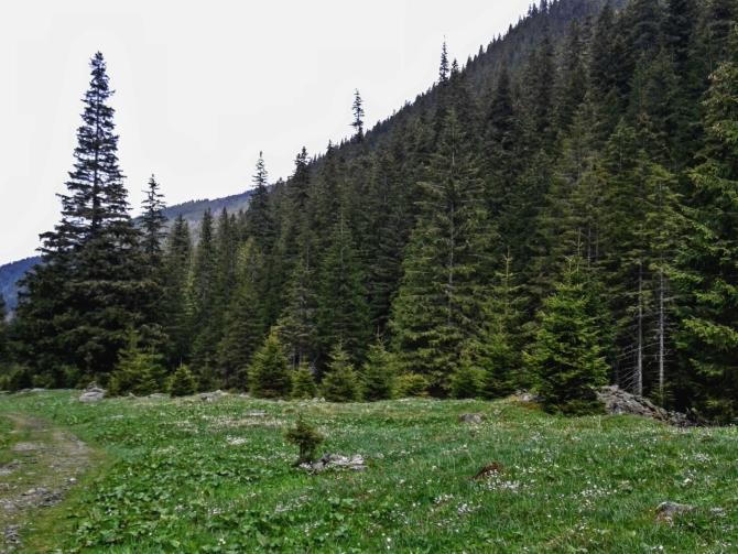Cabana Valea Sâmbetei 3 - Cabana Valea Sâmbetei - traseu de primăvară