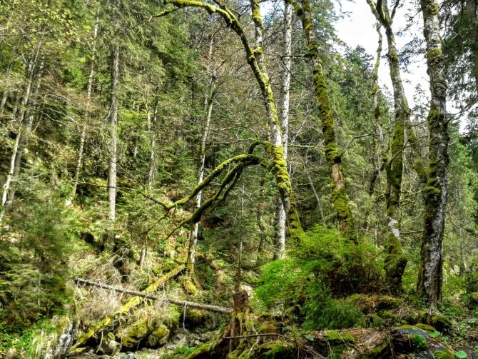 Cabana Valea Sâmbetei 6 - Cabana Valea Sâmbetei - traseu de primăvară