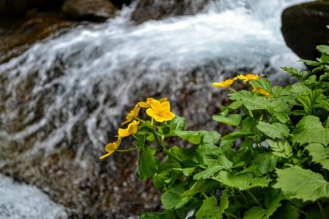 Cabana Valea Sâmbetei 9 - Cabana Valea Sâmbetei - traseu de primăvară